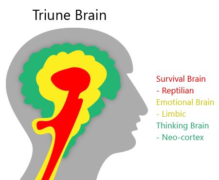 Cérebro Triune